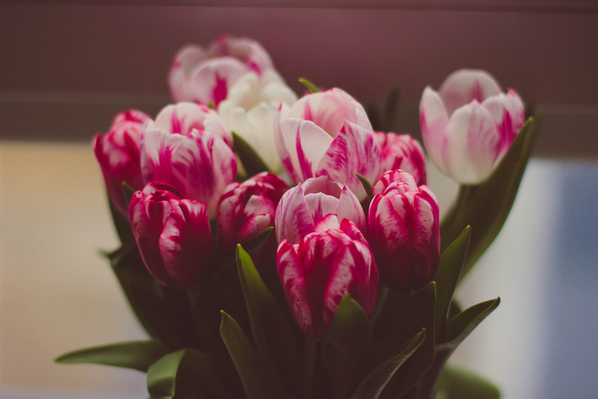 10 Flowers You Need To Know About To Gift Your Beloved